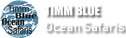Timm Blue Ocean Safaris
